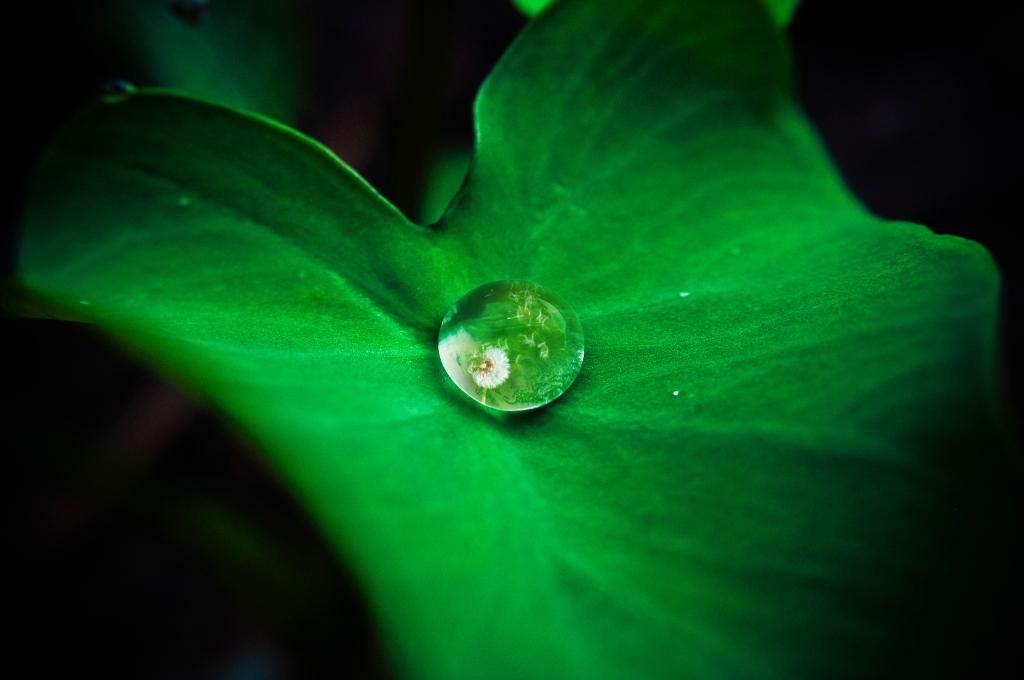 drop of rain on leaf