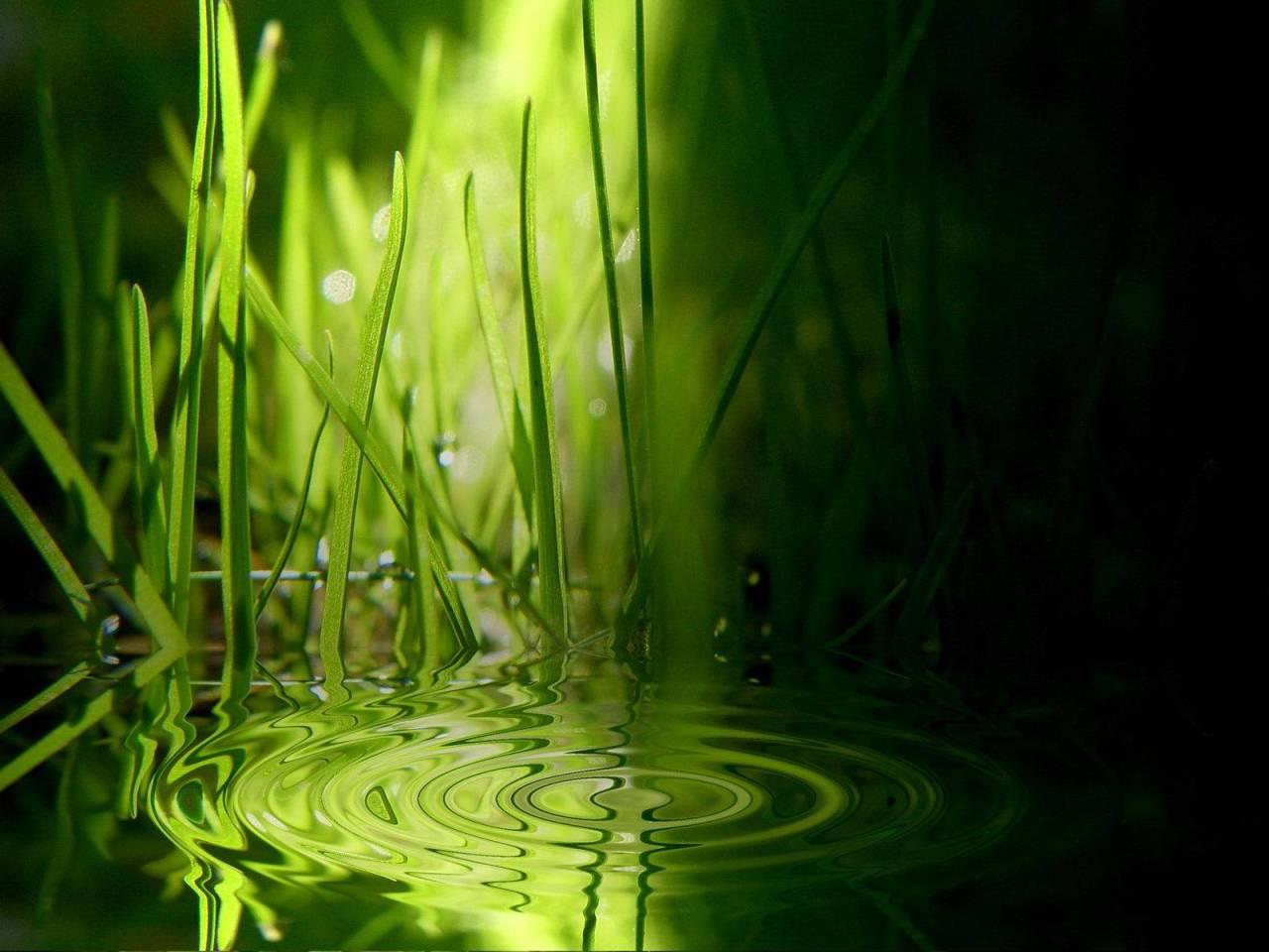 green-grass-water-relax-wallpaper
